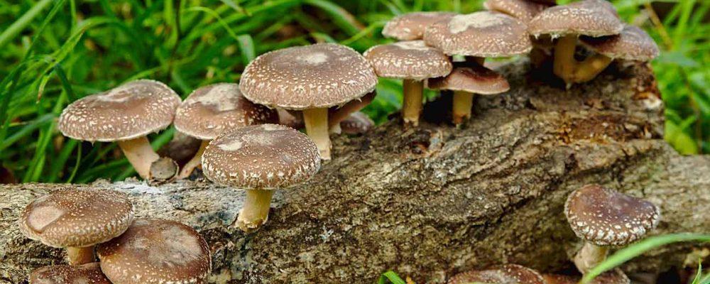 Fungi Natur