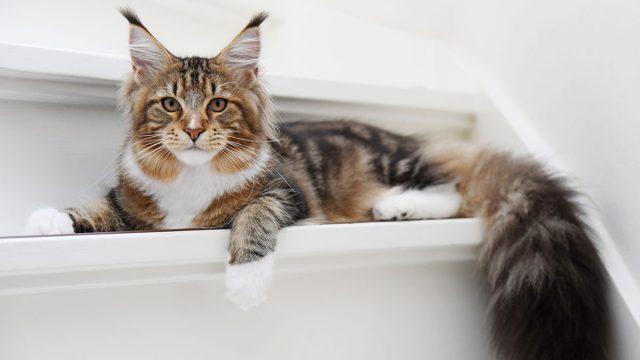 Dónde comprar gatos en Madrid