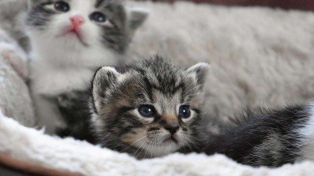 Adoptar gato en Madrid